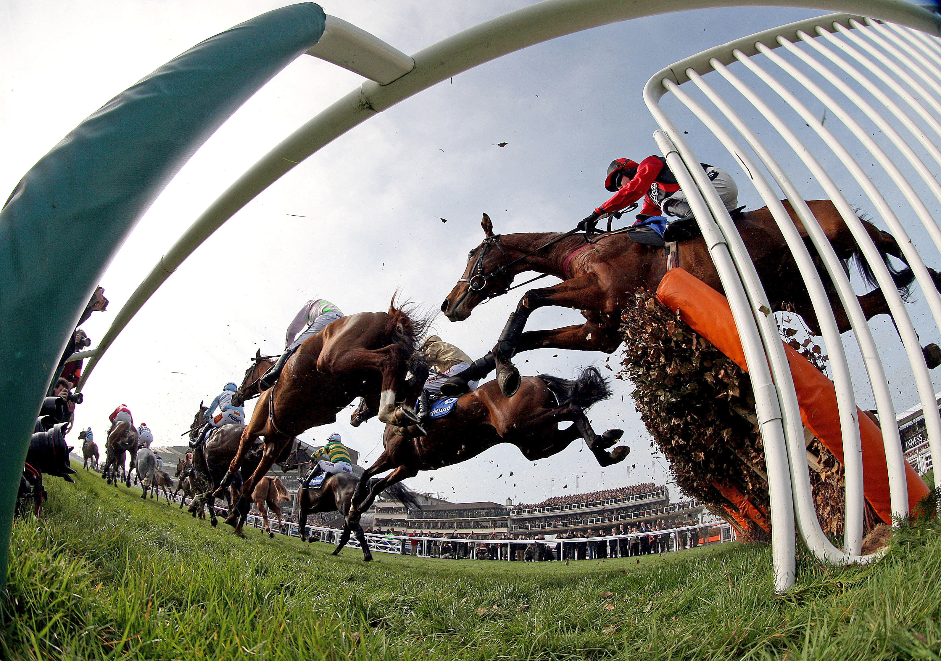 Seven races left at the 2018 Cheltenham festival, and we've got you covered for them all.