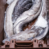 Eel fishermen who went out of business after Irish ban may soon receive financial support