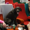 The Light House Cinema held their dog-friendly screening this morning and it was almost TOO adorable