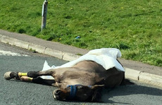 Gardaí launch investigation after horse dies on road in Cork housing estate