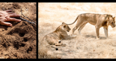 Turning the lion hunters into lion defenders