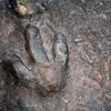 170 million-year-old dinosaur footprints discovered on Scotland's Isle of Skye
