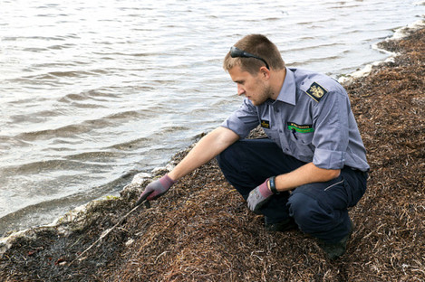 A search team member from the Danish Emergency Services looks for body parts following the death of journalist Kim Wall