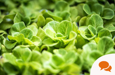 In the garden: 'I find that my system is craving fresh greens after a long winter'