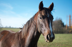 7,748 horses slaughtered for meat last year, with 64,074 horses slaughtered since 2012