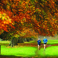 Living near a green space may not have any impact on obesity