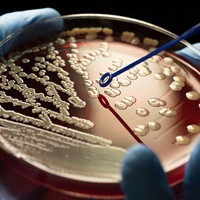 26 people have been hit with a superbug in the last four weeks