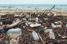 Scientists have accidentally created a mutant enzyme that eats plastic