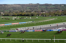 Horse dies at Cheltenham as UK temperatures soar to record levels