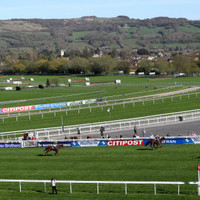 Horse dies at Cheltenham as UK temperatures soar to record levels