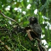 A decade of discovery:1,200 new species found in Amazon rainforest