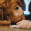 It is not Ed Sheeran's Dolmio Day in his latest music video