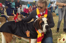 6 family events to check out this bank holiday weekend - from dog shows to summer carnivals