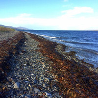 'We're delighted': Controversial Cork seaweed harvesting project delayed as judicial review granted