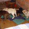 Vet who injected liquid heroin into puppies to smuggle drugs into US extradited