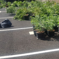 Pics: Gardaí attend Dublin house fire, seize €110,000 worth of cannabis from the growhouse on the property