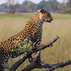 Toddler snatched and eaten by leopard in Uganda's national park