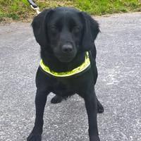 Revenue dog finds €60,000 hidden in man's suitcase