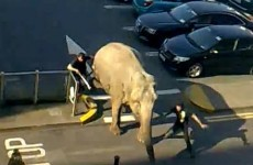 Circus trainer trampled by elephant in Cork