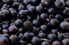 Blackcurrant waste from Ribena production could create 'natural' hair dye
