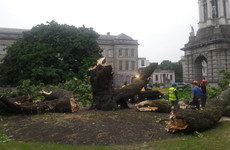 An iconic 170-year-old tree collapsed overnight in Trinity College