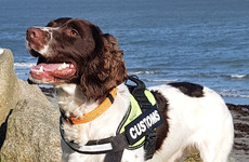 Revenue dog Flynn assists as cash, alcohol and cigarettes seized at ports