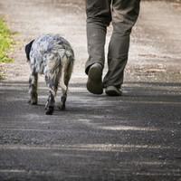 US man wrongly linked to burglary after 'walking dog while black'
