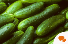 In the garden: GIY cucumbers to make the perfect Tzatziki