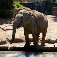Ice pops and mud baths: Keeping Dublin Zoo's residents cool in the heatwave