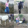 Video: Volunteers work to keep abandoned horses in Dublin hydrated during the heatwave