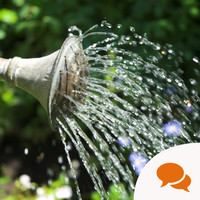 In the garden: Michael Kelly's top tips for conserving water use