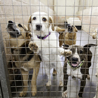 Number of dogs being 'put down' by pounds falls by 40%