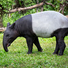 Boy who witnessed toddler sister being attacked by tapir awarded €25,000