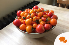GIY tomatoes: 'We are in what I like to call 'bruschetta' season'