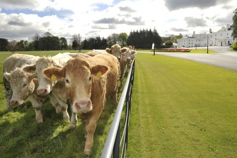 We didn't know there were cattle so close to the Áras an Úachtaráin...