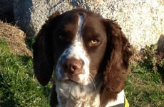 Amphetamines worth half a million seized with help of detector dog Defor