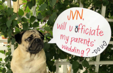 Queer Eye's Jonathan is officiating the wedding of Doug the Pug's owners