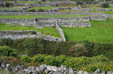 'Dry stone walls are part of our history and culture but there are plans to replace them with fencing'