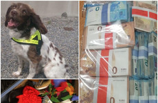Revenue detector dog Josie helps find €90k in cash that could be connected to criminal activity