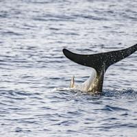 Three beaked whales wash ashore in 'highly unusual' strandings