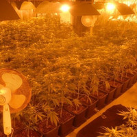 European gangs are using rural Longford to grow cannabis on an industrial scale