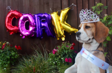 Pet Sitters Ireland are running an animal version of the Rose of Tralee and the contestants are adorable
