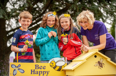 Ireland has its first 'bee-friendly' roundabout
