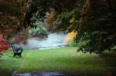 12 beautiful photos of trees around Ireland at the turn of autumn