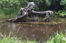 Double Take: The eerie swamp statue found in a little-known Wicklow park