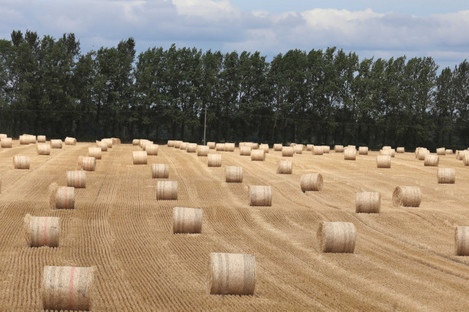 Bales of straw on a parched field in Kildare during July's heatwave.