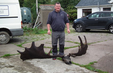 Tyrone fisherman finds skull and antlers of extinct 'Great Irish Elk'
