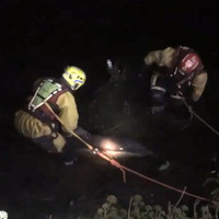 Dolphin found dead in River Lee hours after being rescued by firefighters