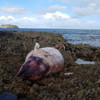 Tánaiste orders Department to assist with investigation into beaked whale deaths