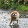 Wet weather expected as tail end of hurricane due to hit Ireland next week